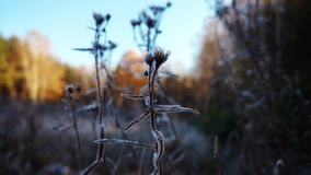 Dry grass in frost. Taken in the woods early in the morning Stock Photo
