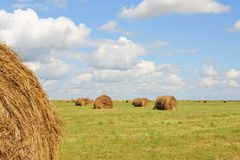 Dry grass on the green field Stock Photography