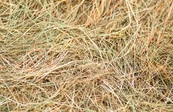 Dry grass green yellow background rustic base hay food for livestock natural pattern stock image