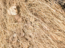 Dry Grass on the Ground with Brown Leaves. Dry Brown Grass on the Ground with Dried Leaves in April Royalty Free Stock Photos