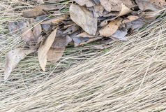 Dry Grass on the Ground with Brown Leaves. Dry Brown Grass on the Ground with Dried Leaves in April Stock Photos