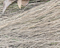 Dry Grass on the Ground with Brown Leaves. Dry Brown Grass on the Ground with Dried Leaves in April Stock Photography