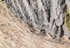 Dry Grass on the Ground with Brown Leaves. Dry Brown Grass on the Ground with Dried Leaves and Bark of Tree Stock Image