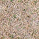 Dry grass ground, seamless background texture. Dry grass with green plants, square seamless background photo texture Stock Photos
