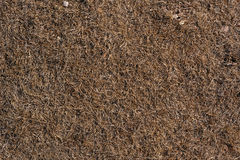 Dry grass on the ground. Stock Photography