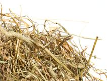 Dry grass hay Royalty Free Stock Photography