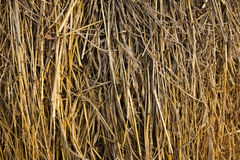 Dry grass, hay Royalty Free Stock Photography