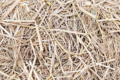 Dry grass or hay texture Royalty Free Stock Photos