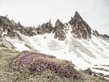 Dry grass and heather bushes at mountain trekking path. Snowy mountains in heavy clouds yellow winter view valley twig travel tourism sunny summit spring stock images