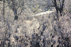 Dry grass. Hoarfrost. Stock Images