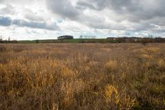 Dry Grass In The Autumn Field Royalty Free Stock Photography