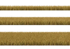 Dry grass. Stock Images