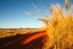 Dry grass in the Kalahari. View from a red sand dune with dry grass to a valley in the Kalahari, Namibia, Africa Royalty Free Stock Photography