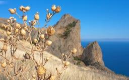Dry grass on Karadag mountain. Black Sea, Crimea Royalty Free Stock Photography
