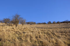 Dry grass landscape Royalty Free Stock Photography