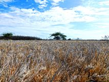 Dry grass landscape Royalty Free Stock Image
