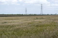 Dry grass lanscape with electricity post Royalty Free Stock Photography