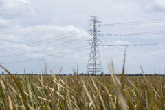 Dry grass lanscape with electricity post Royalty Free Stock Images