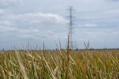 Dry grass lanscape with electricity post Royalty Free Stock Image