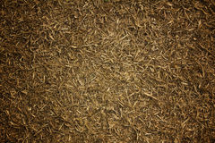 Dry grass lawn Royalty Free Stock Images