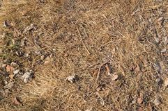 Dry grass, leaves and twigs. Autumn background. Natural pine forest ground with some leaves, twigs and cones Forest soil texture background Stock Image