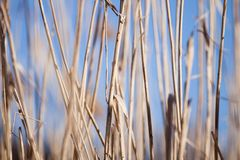Dry grass Royalty Free Stock Image