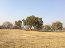 Dry grassy ground with clear blue sky. The dry grassy ground is looking very nice with the green and dry trees by the clear blue sky background Royalty Free Stock Image