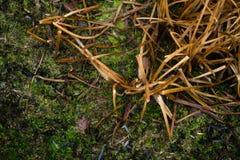 Dry grass in the marsh Stock Photo