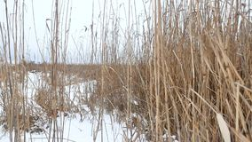 Dry the grass marsh winter reed beautiful landscape nature Stock Photos