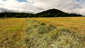 Dry grass on meadow in farmland bellow hill. Stalks are shaiking in wind. Haymaking in the countryside below hills. Royalty Free Stock Images