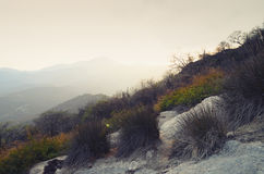 Dry grass and mountains behind in soft sunset light Stock Photo