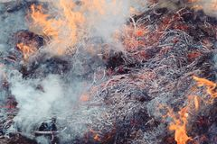 Dry grass near the forest. the forests are burning. fire hazard. have toning. Co2 firefighter flame ignite smoky change fog heat pollution sun sunrise sunset royalty free stock photo