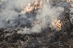 Dry grass near the forest. the forests are burning. fire hazard. have toning. Co2 flame change disaster emergency fog heat smoke climate damage danger dead stock images