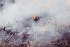 Dry grass near the forest. the forests are burning. fire hazard. have toning. Co2 flame change disaster emergency fog heat smoke climate damage danger dead stock photography