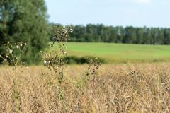Free Dry Grass On A Summer Meadow Stock Photography - 159407012
