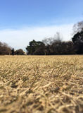 Dry grass park Stock Photos