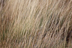 Dry grass Stock Photography