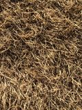 Dry grass pattern Royalty Free Stock Photo