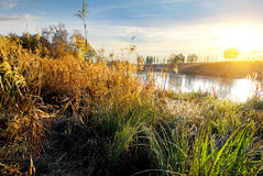 Dry grass on river Royalty Free Stock Photography