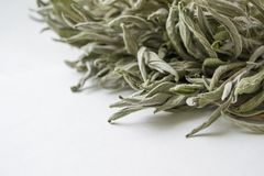Bunch of dry green lemongrass on a white background. The dry grass of the sage on a white background looks from the side. Salvia officinalis stock photos