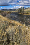 Dry grass by the Salmon River. Stock Images