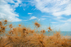 Dry grass with sand beach. Sea view Stock Photo