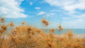 Dry grass with sand beach. Sea view Royalty Free Stock Image