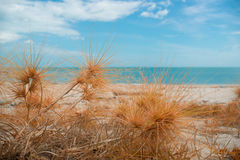 Dry grass with sand beach. Sea view Royalty Free Stock Photography