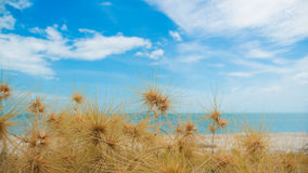 Dry grass with sand beach. Sea view Stock Photos