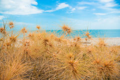 Dry grass with sand beach. Sea view Royalty Free Stock Photos