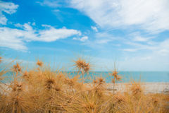 Dry grass with sand beach. Sea view Stock Photography