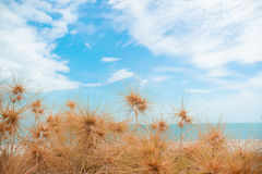 Dry grass with sand beach. Sea view Royalty Free Stock Images