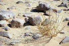 Dry grass Stock Image