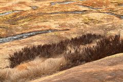Dry grass in the savannah. The Dry grass in the savannah stock photography